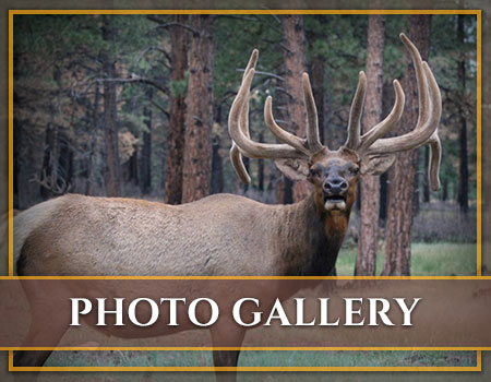Hunt Mill Hollow Ranch Photo Galleries